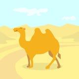 Karikatur-Kamel-Wüsten-buntes flaches Retro- Lizenzfreie Stockfotos