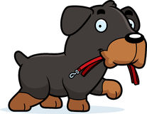 Karikatur Rottweiler-Leine Lizenzfreie Stockfotos