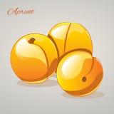 Karikatur süße appricots auf grauem Hintergrund, Vektorillustration Lizenzfreie Stockfotografie