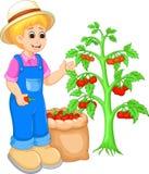 Karikatur-Sammelntomate des gutaussehenden Mannes auf Garten Stockfoto