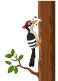 Karikaturspecht auf einem Baum Stockbilder
