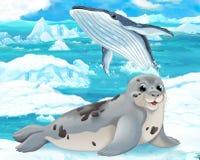 Karikaturszene - arktische Tiere - Dichtung Lizenzfreies Stockfoto