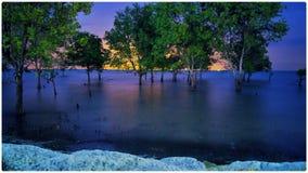 Karimun мангровы Стоковая Фотография
