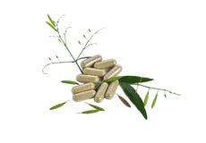 Kariyat herb Capsules. Isolated on white background stock photography