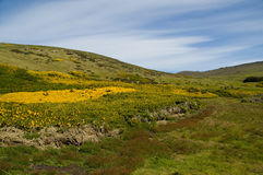 Karkasse-Insel - Falklandinseln Stockfoto