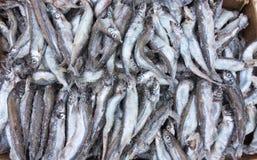 Karkassenfische Stockfotografie