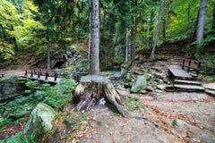 Karkonosze山森林在波兰 免版税库存照片