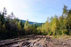 Karkonosze forest Stock Photos