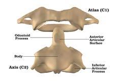 Karkowa kręgosłup anatomia ilustracja wektor