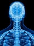 Karkowi nerwy ilustracja wektor