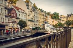 Karlovy Vary, dove Royalty Free Stock Photography