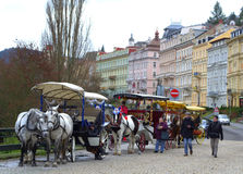 Karlovy Vary horses Stock Photography