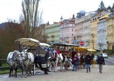 Karlovy Vary horses Stock Photography