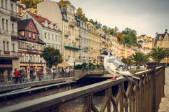 Karlovy Vary, Taube Lizenzfreie Stockfotografie