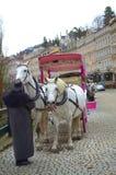 Karlovy Vary white horses Stock Images