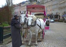 Karlovy Vary white horses Stock Image