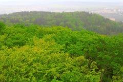 Karlsbad-Wald Lizenzfreies Stockfoto