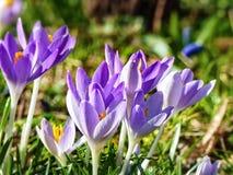 Karlsruhe-Blumen Stockbild