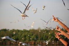 Karm segulls, Bangpu, Tajlandia obrazy stock