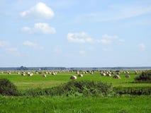 Karma kawałki na zieleni polu, Lithuania fotografia stock