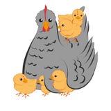 Karmazynka z kurczakami Obraz Royalty Free