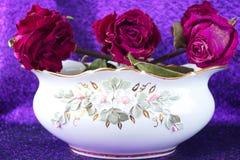 Karmazyny, suche róże w białej wazie z stiukiem obraz royalty free