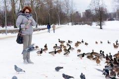 Karmić kaczki opuszczał dla zimy przy zatoczką Zdjęcie Royalty Free