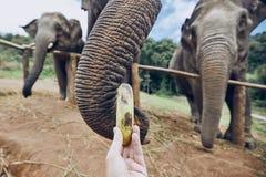 Karmić słoń zdjęcia royalty free