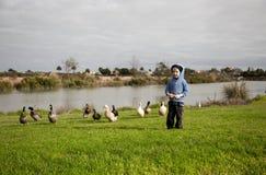 Karmić kaczki. Obraz Royalty Free
