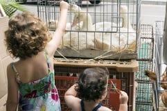 Karmić kaczki Fotografia Stock
