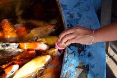 Karmi ryba w stawie Fotografia Stock