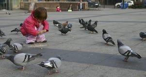 karmienia gołębi Fotografia Stock