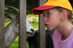 karmienia zwierząt Zdjęcia Stock