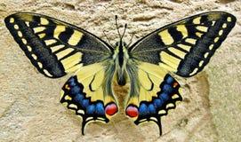 Karminrote Flügel Lizenzfreie Stockbilder