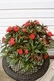 Karminrote rote Blumen Stockfotos