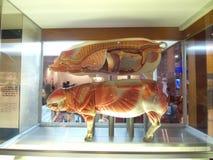 karmowa Hong kong muzeum nauka Zdjęcia Royalty Free