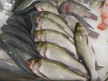 karmowa ryba na lodzie, ryba zdjęcia royalty free