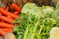 karmowy świeży japoński sałatkowy warzywo Fotografia Stock