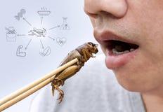 Karmowy insekt: Mężczyzna ręki mienia chopsticks je krykieta insekta smażącego jako jedzenie na restauracji i symbolu ikon medial obraz royalty free