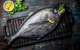 Karmowy tło z surowym świeżej ryba reineta, ziele, olil i cytryną, Odgórny widok Zdjęcie Stock