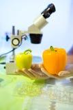 Karmowy testowanie w laboratorium GMO jedzenie Obraz Royalty Free