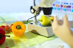 Karmowy testowanie w laboratorium GMO jedzenie Obrazy Stock