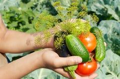 karmowy warzywo Obrazy Stock