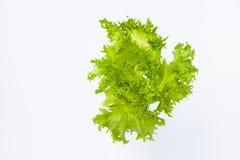 karmowy świeży japoński sałatkowy warzywo fotografia royalty free
