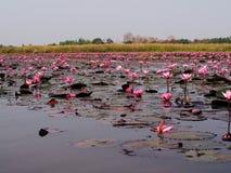 Karmozijnrode Overzees in de ochtend Thailand Royalty-vrije Stock Foto's