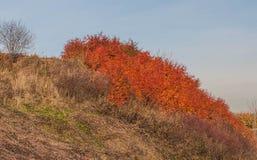 Karmozijnrood gebladerte Autumn Landscape Royalty-vrije Stock Fotografie