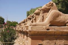 Karnak - Egypte stock foto's