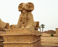 karnak sfinksa świątynia Obraz Stock