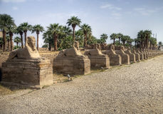 Karnak Temple. Walk from the Sphinx, Karnak Temple, Egypt Royalty Free Stock Photos