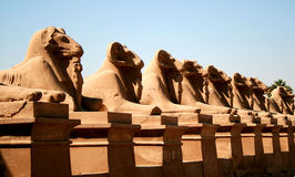 Karnak Temple 69 Royalty Free Stock Image
